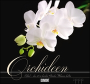 Orchideen 2022