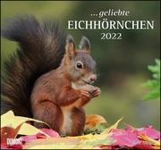 ... geliebte Eichhörnchen 2022