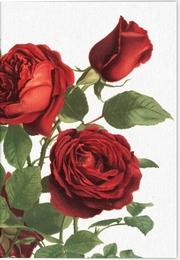 Geschichte der Rose Klappkarte Motiv Tiamo Rose