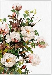 Geschichte der Rose Klappkarte Motiv Schottische Rose