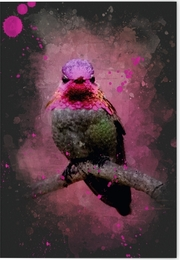Vögel auf Instagram Klappkarte Motiv Rosa Annakolibri