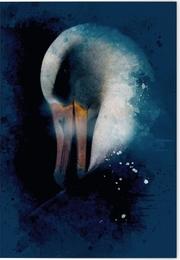 Vögel auf Instagram Klappkarte Motiv Laysan-Albatros