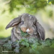 Kaninchen 2022
