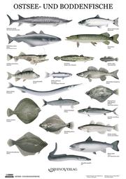 Ostsee- und Boddenfische - Poster