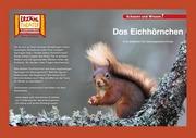 Kamishibai: Das Eichhörnchen