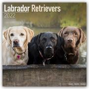 Labrador Retriever 2022 - 16-Monatskalender