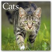 Cats - Katzen 2022