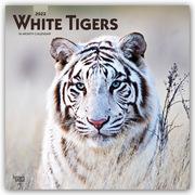 White Tigers - Weiße Tiger 2022