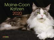 Maine-Coon-Katzen 2020