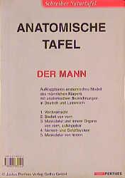 Anatomische Tafel: Der Mann