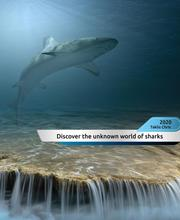 Discover the unknown world of sharks!