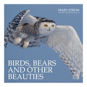 Birds, Bears and other Beauties