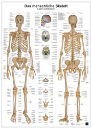 Anatomie Lerntafel