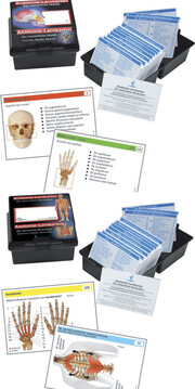 Anatomie Lernkarten