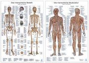 Anatomie-Poster Doppelpack, Die menschliche Muskulatur/Das menschliche Skelett, 2 Poster