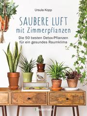 Saubere Luft mit Zimmerpflanzen