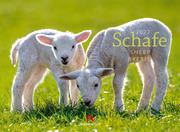 Schafe 2022