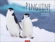 Pinguine 2022