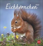 Eichhörnchen Postkartenkalender 2022