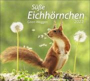 times&more Eichhörnchen 2022