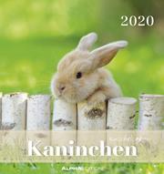 Kaninchen 2020