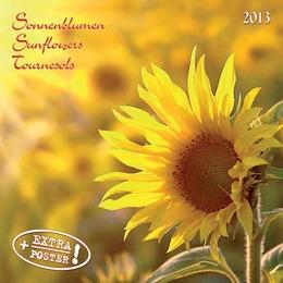 Sonnenblumen/Sunflowers/Tournesols 2013