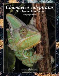 Chamaeleo calyptratus - Das Jemenchamäleon