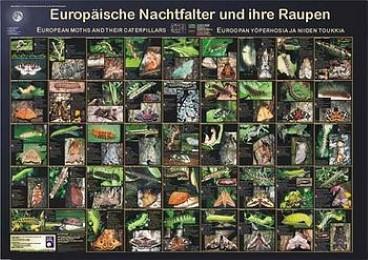 Europäische Nachtfalter und ihre Raupen