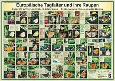 Europäische Tagfalter und ihre Raupen