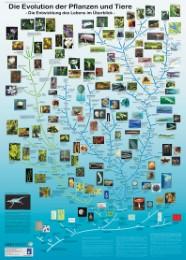 Die Evolution der Pflanzen und Tiere