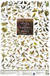 Vögel in den Gärten und Parks Europas