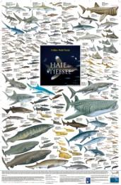 Haie der Tiefsee