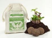 Samenkugeln - Gartendrachensaaten