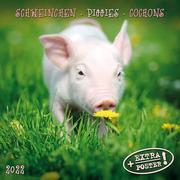 Piggies/Schweinchen/Cochons 2022