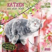 Katzen aus aller Welt/Cats from all over the World 2022